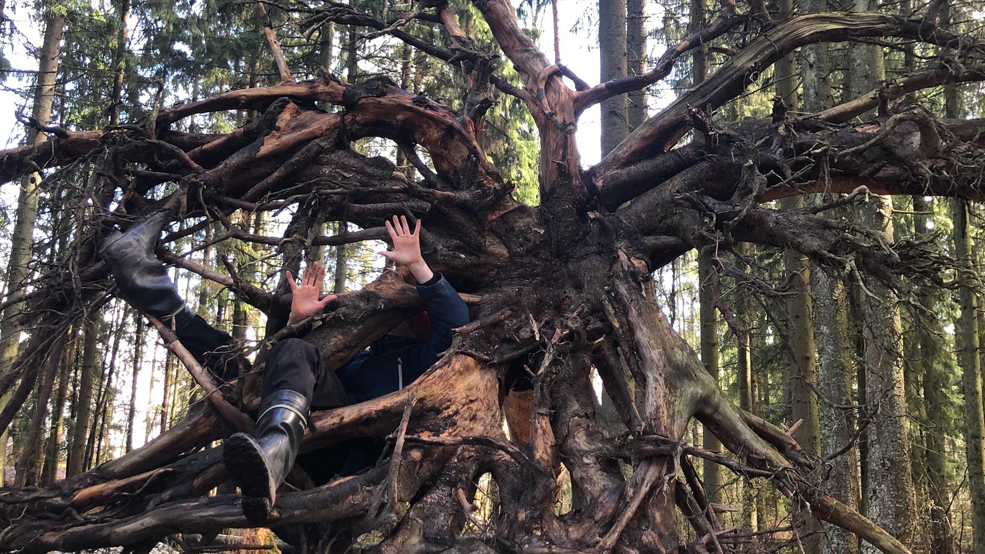 Henkilö metsässä kietoutunut paljaaseen puun juurakkoon. Vain kädet ja jalat näkyvät.