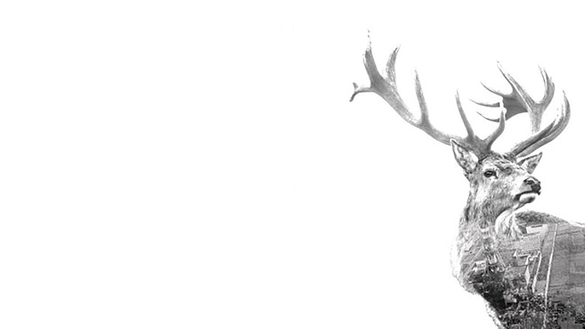 Tyylitelty kuva peurasta
