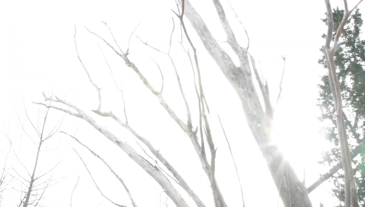 Valottunut, lähes valkoinen kuva, jossa näkyy lehdettömien lehtipuiden rankoja ja oksia. Puiden välitse pääsee valkoisia auringonsäteitä.