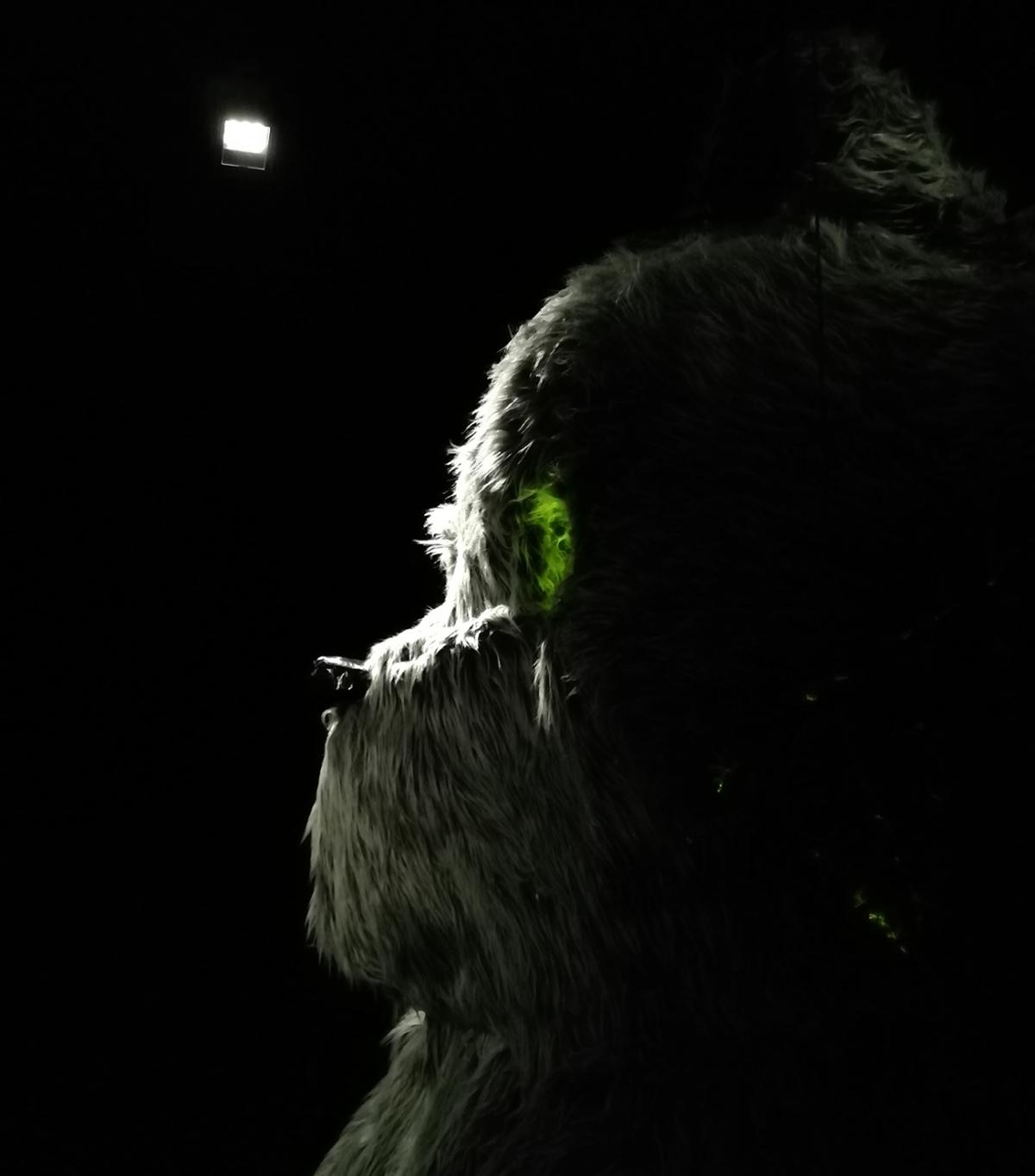 Pimeä, lähes musta kuva, jossa valo valaisee harmaana nallekarhun pään sivuprofiilin. Nallen silmän kohdalle osuu pieni vihreä valo.